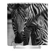 Stripes - Zebra Shower Curtain