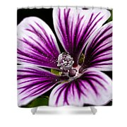 Stripped Blossom Shower Curtain