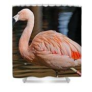 Strolling Flamingo Shower Curtain