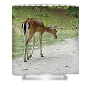 Strolling Through The Park Shower Curtain