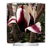 Striped Tulip Shower Curtain
