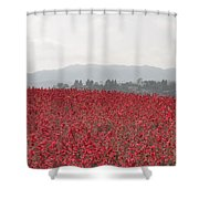 Study In Red And Grey Shower Curtain