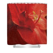 Study In Red Shower Curtain