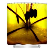 Study Of A Golden Cup Flower 5 Shower Curtain