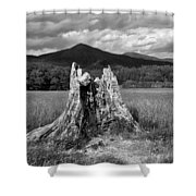 Stump In A Field Shower Curtain