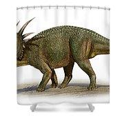 Styracosaurus Albertensis Shower Curtain
