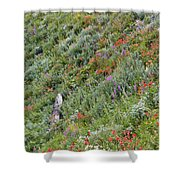 Subalpine Wildflowers Shower Curtain