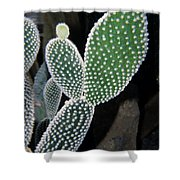 Succulants Shower Curtain