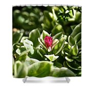 Succulent's Ruby Shower Curtain
