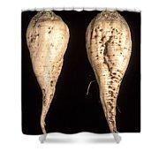 Sugar Beet Breeding Shower Curtain