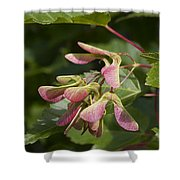 Sugar Maple Acer Saccharum Seed Pods Shower Curtain