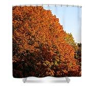 Sugar Maple Shower Curtain