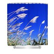 Sugarcane Shower Curtain