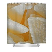 Sugary Grapefruit Slices Shower Curtain