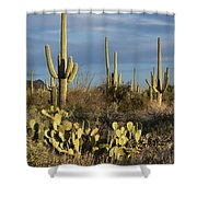 Suguaros At Sunset Shower Curtain