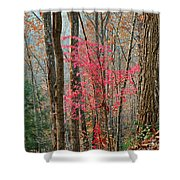 Sumac In Morning Light At Cumberland Falls State Park Shower Curtain