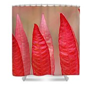Sumac Leaves Rhus Coriaria In Fall Shower Curtain by Mike Grandmailson