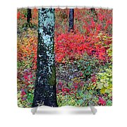 Sumac Slope And Lichen Covered Tree Shower Curtain