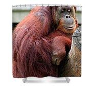 Sumatran Orangutan Shower Curtain