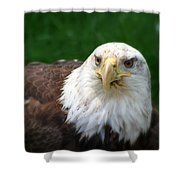 Summer Bald Eagle  Shower Curtain
