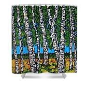 Summer Birches Shower Curtain