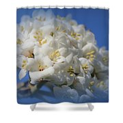 Summer Bunches Shower Curtain