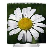 Summer Daisy  Shower Curtain