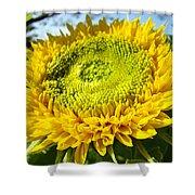 Summer Floral Art Prints Yellow Sunflower Shower Curtain