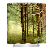 Summer Forest. Pine Trees Shower Curtain by Jenny Rainbow