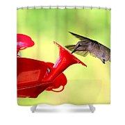 Summer Fun Hummingbird Shower Curtain