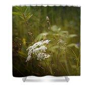 Summer Grasses Shower Curtain