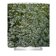 Summer Lace Shower Curtain