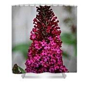 Summer Lilac Shower Curtain