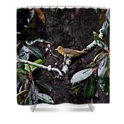 Summer Tanager Lady Shower Curtain