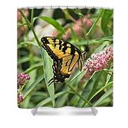 Summer's Flying Tiger  Shower Curtain