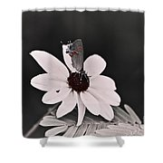 Summers Memory Shower Curtain