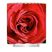 Summer's Red Rose  Shower Curtain