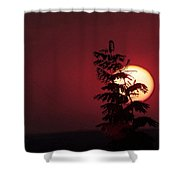 Sun And The Flower  Shower Curtain