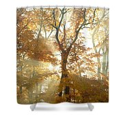 Sun Breaking Through Trees Shower Curtain