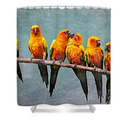 Sun Conures Shower Curtain