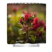 Sun In The Garden Shower Curtain