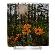 Sunburst On Sunflowers Shower Curtain