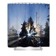 Sunburst Through Silhouetted Pine Trees Shower Curtain
