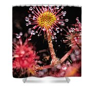 Sundew, Vancouver Island, British Shower Curtain