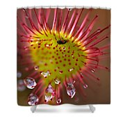 Sundew With Digested Food, British Shower Curtain