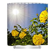 Sunflare And Yellow Roses Shower Curtain by Amber Flowers