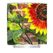 Sunflower 2 Sf2wc Shower Curtain
