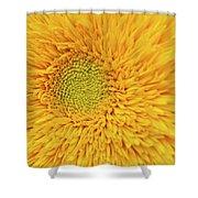 Sunflower 2881 Shower Curtain