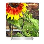 Sunflower 3 Sf3wc Shower Curtain