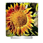 Sunflower And Bud Shower Curtain